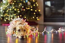 A dog tangled in Christmas lights
